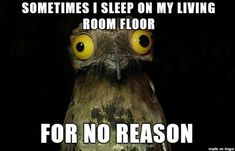 True Pictures - Search our So True memes, pictures, videos & more! Find funny but true memes that show just how hilarious life can be. World Of Warcraft, Potoo Bird, Most Famous Memes, Famous Quotes, All Meme, Meme Guy, Christian Humor, Funny Christian Memes, Christian Dating