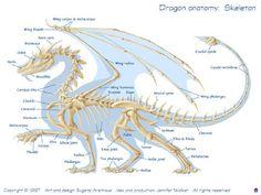 Dragon Skeletal Structure