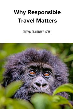 See why green, responsible travel is important for locals, wildlife, and the environment, as well as what the difference is between a true responsible travel business and a greenwashing travel business. Ecotourism | Responsible tourism | Wildlife conservation projects - @greenglobaltrvl