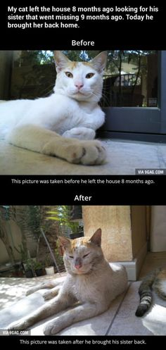 ** This cat did what is called profesionally 'psi-trailing.' Hope his humans took him to the vet after his journey of love and endurance.