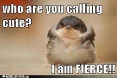 who are you calling cute?  I am FIERCE!!