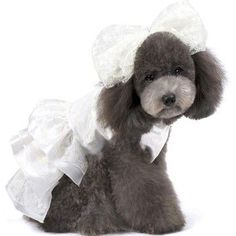 High Quality Aesthetic Pearl Wedding Dress for Dog Fashion Apparel & Store Pet Clothes