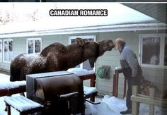 Meanwhile, in Canada. - Funny man touching noses with a big moose in Canada. A moose for Kirsten, who didn't see one the whole time she was in Canada. Moose Pictures, Animal Pictures, Moose Pics, Canada Pictures, Funny Images, Funny Pictures, Amazing Pictures, Funny Pics, Bing Images