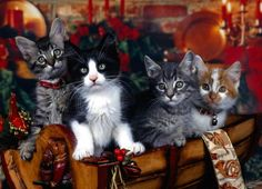 Deck the halls with bells and kittens, tra la la la la la la la la !
