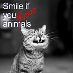 Smile if you love animals