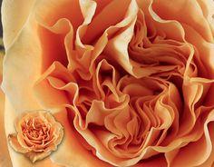 "loving this ""GARDEN TURTLE"" #rose Turtle, Roses, Garden, Flowers, Beauty, Turtles, Garten, Pink, Tortoise"