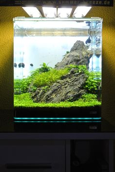 1000+ images about Aquarium World on Pinterest Aquascaping, Betta ...