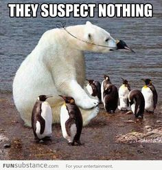 Funny Penguins with polar bear Funny Animal Memes, Funny Animal Pictures, Funny Animals, Cute Animals, Funny Pics, Bear Pictures, Funny Shit, The Funny, Hilarious