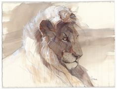 Academy of Art Character and Creature Design Notes: Sketchbook inspirations Unfinished: mix of watercolour and pencil Sketchbook Inspiration, Art Sketchbook, Graphic Design Illustration, Illustration Art, Character Illustration, Lion Art, Animal Sketches, Wildlife Art, Creature Design