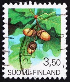 FINLAND - CIRCA 1990: a stamp printed in the Finland shows Acorns, the Fruit of the Oak Tree, circa 1990