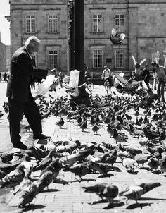 Las palomas en la plaza de Bolívar