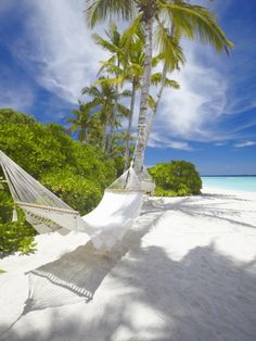 Hammock on Empty Tropical Beach, Maldives, Indian Ocean, Asia Photographic Print at Art.com
