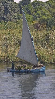 Transporting bananas on the Nile River in EGYPT