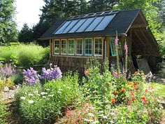 Salvaged window potting shed & greenhouse, rustic and beautiful - makes me things about all those windows in the basement...