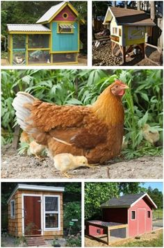 Chicken Coop Designs at BackyardChickens.com - Get design ideas and free building plans for over five hundred different chicken coops.