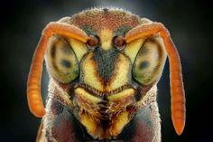 Incredible creatures up-close - Iwan Susanto/Solent News/Rex