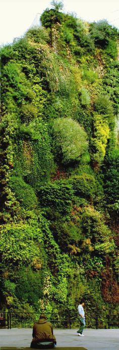 Inspirational gardening ideas! Amazing!