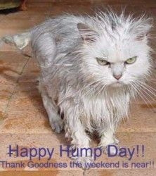 Happy Hump Day!!