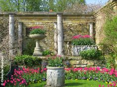 Colourful tulip displays in the Italian Garden at Hever in April