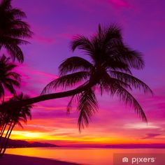 Palm tree silhouette at sunset on tropical beach Wall Mural ✓ Easy Installation ✓ 365 Days to Return ✓ Browse other patterns from this collection! Romantic Beach Photos, Beautiful Beach Pictures, Beautiful Sunset, Beautiful Beaches, Beach Sunset Pictures, Sunset Photos, Palm Tree Pictures, Sunset Images, Romantic Quotes