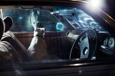 Martin Usborne y la soledad de los perros (Yosfot blog)