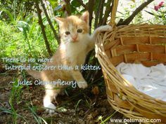 #catquotes   does kitten are naturally born intrepid explorer?