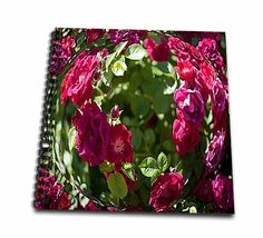 click on A Beautiful Red Rose Garden In a Bubble Layered With The Background Done that is Posturized to enlarge!