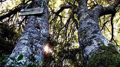 ...e riposarsi all'ombra dei grandi alberi