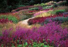 (from Piet Oudolf). - Garden Chic