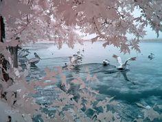 infrared birds