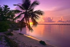 Tropical Sunset - Bahia Honda State Park (photo by Kevin McNeal)