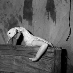"""Roger Ballen, """"Einarmige Gans"""" (2004) aus der Serie """"Shadow Chamber"""""""