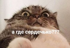 Stupid Pictures, Cute Pictures, Funny Animals, Cute Animals, Happy Memes, Russian Memes, Smiling Cat, Funny Mems, Cute Love Memes