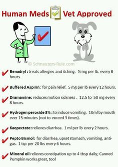 Human meds for dogs! Just in case! Love My Dog, Puppy Love, Meds For Dogs, Pet Meds, Dog Safe Medications, Fu Dog, Pet Health, Health Tips, Baby Health