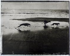 Sarah Moon, Maria's Dogs, 2000
