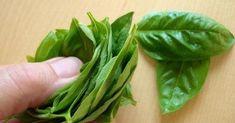 oxafies.com Herbal Medicine, Spinach, Herbalism, Cancer, Vegetables, Health, Tips, Blog, Image