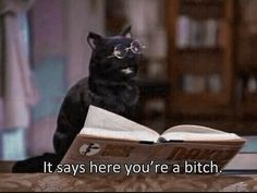 Movie Quotes, Funny Quotes, Funny Memes, Hilarious, Cat Quotes, Fun Funny, Super Funny, Girl Quotes, Funny Stuff