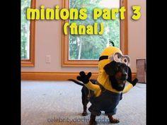 Die Dackel Minions - Runde 3 & FINALE