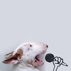 Illustrations Rafael Manteso #bullterrier #dog #illustrations #creativity #art #inspiration #ideas