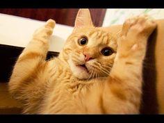 gatti che si spaventano facilmente