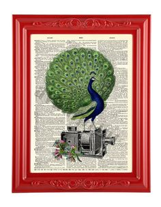 Nature Filming Peacock Camera Print on an Antique by AvantPrint, $8.00