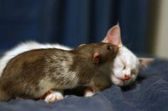 ネコとネズミが出会ってしまった!