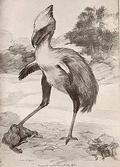 """These extinct 9 ft Tall, 280 lb flightless, carnivorous """"Terror Birds"""" lived In Patagonia during the Pleistocene era. Phororhacos longissimus, one of the largest carnivorous birds to have ever to have lived, had claws like meat hooks and a massive hooked beak for ripping flesh from its prey while holding them down with sharp talons."""