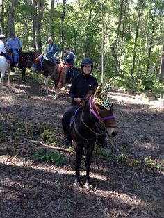 Rodeo wearing his #012 Cheetah mule