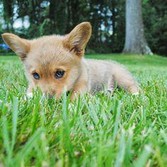 Piesek leżący w trawie!