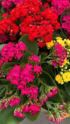 Full Sun Plants, Sun Loving Plants, Container Plants, Container Gardening, Beautiful Gardens, Beautiful Flowers, Lantana Plant, Good Morning Flowers, Drought Tolerant Plants