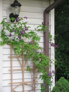 A reminder that I want a garden trellis with bougainvillaea this summer if it will grow on our deck