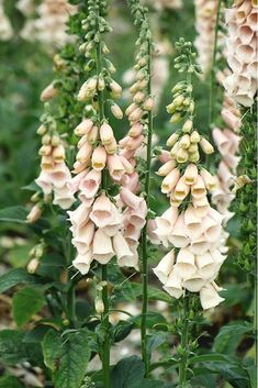 Flowers you can grow by scattering seeds.