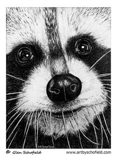#032 Raccoon - 18 X 24 <---- www.artbyschofield.com #animal #art #artoftheday #creative #drawing #fineart #glenschofield #icon #iconic #icons #illustra #illustration #ink #myart #onlineart #onlineartgallery #onlineartsales #paint #painting #paintings #penandink #pens #picture #portraits #portraiture #raccoon