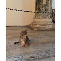 Istanbul:  Cat Frien